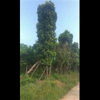 欢迎湖南郴州桂东的陈总和邵总来益阳市星程园林